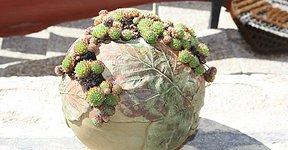 Kaktusz a Holló és Bárány Vendégháznál