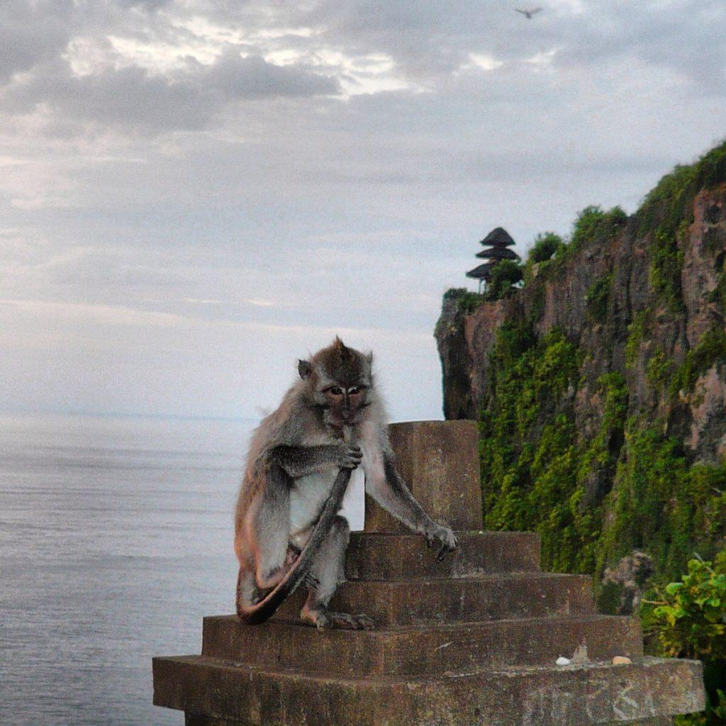 Majom Uluwatun (fotó: Utazzunkegyutt.blog.hu)